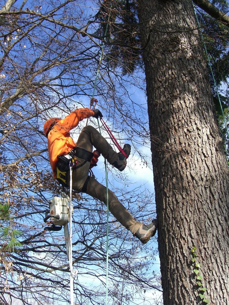 potature-tree-climbing