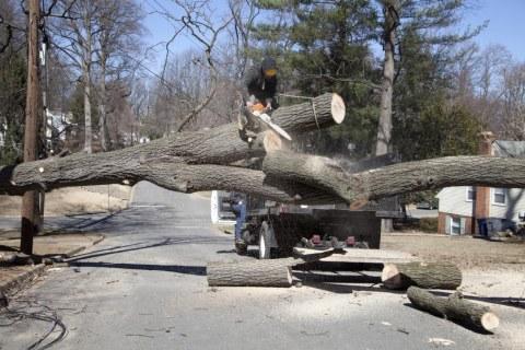 abbattimento-alberi